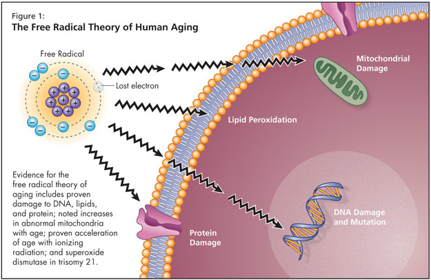 role exit theory of aging Theories of aging this section outlines some of the most widely accepted and major theories of the causes of aging it is important to know the cause(s) of aging, because as with treating any disease one must first understand the problem, so that afterward the precise remedy can be applied.